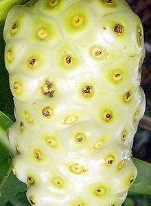 Morinda citrifolia fruit