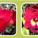 Rlc. Nardia Song x Rlc. Tainan City